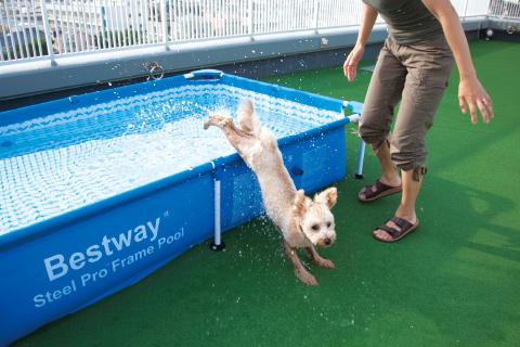 ペット専用のプールや人工芝でペットも快適。